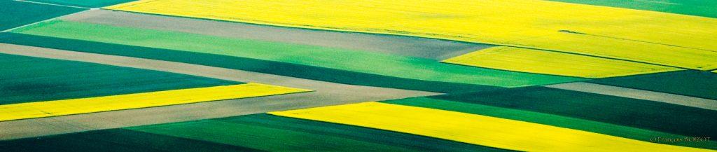 Champs vert & jaune